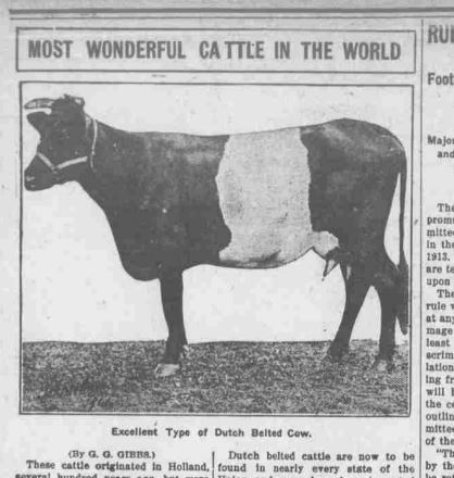 The Dutch Belted Cow: A Research Mystery