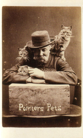 Pointers Pets