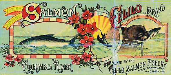 Celilo Salmon