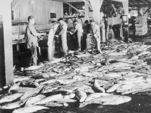 Chinese Workers in Oregon Cannery.jpg