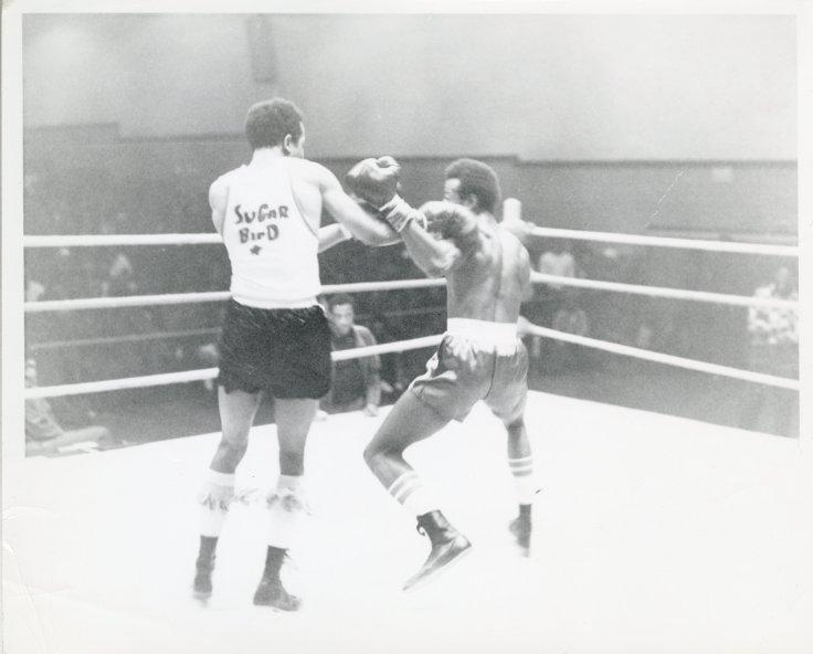 Sugar Bird Boxing