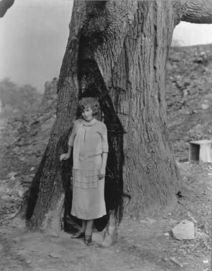 Berks 400 Year Old Herman Oak