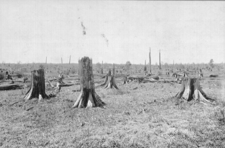 Deer damage to Plantations