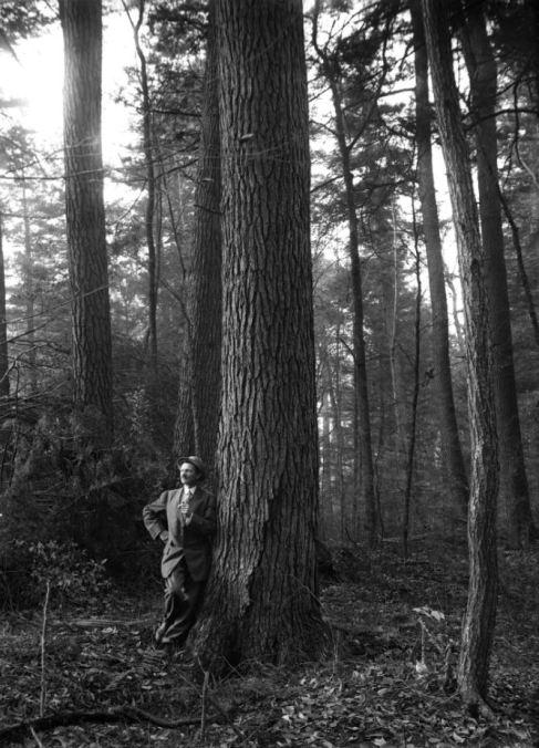 Norwich Original Forest