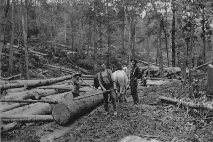 Rolling Logs Unto Skidway